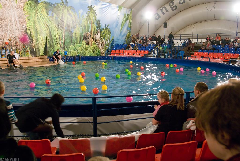 для дельфинарий в иркутске на комсомоле ресурсе ПоздравОК есть