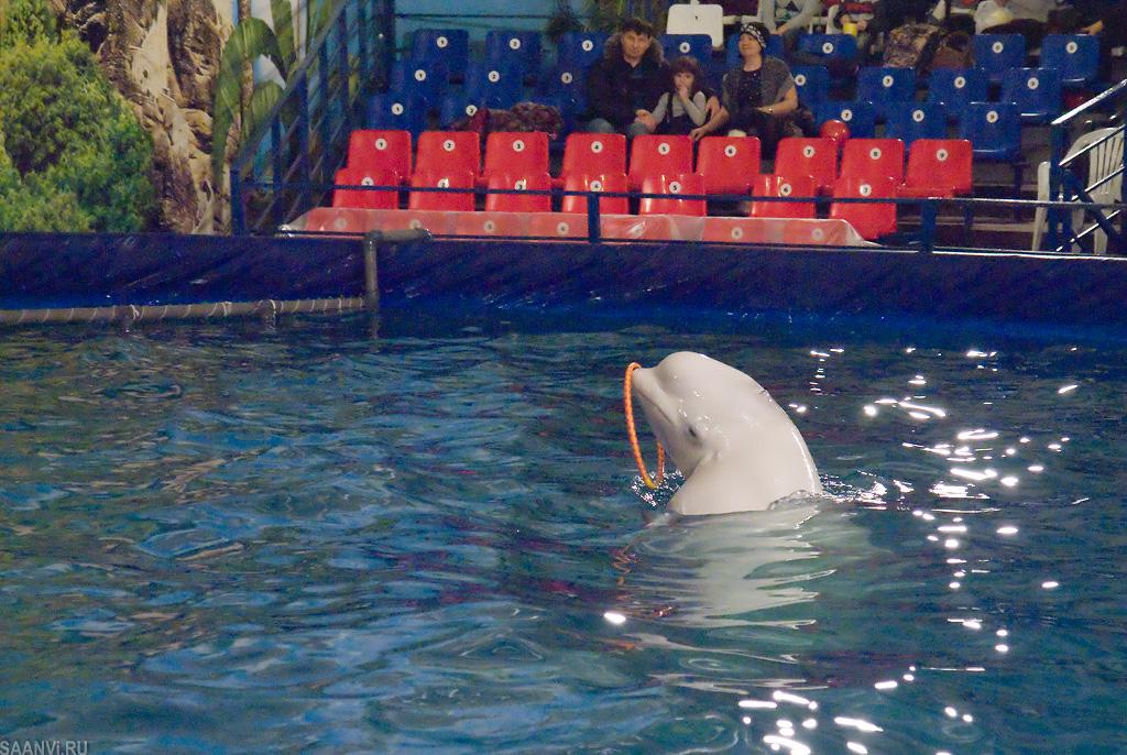 фото из дельфинария красноярск стену может крепиться